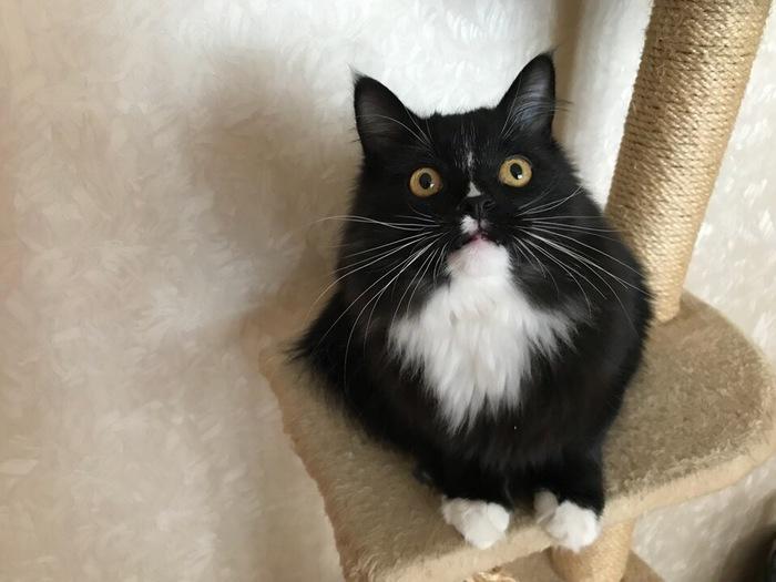 Нашла своего кота в книжном Моё, Кот, Фотография, Совпадение, Матвейка