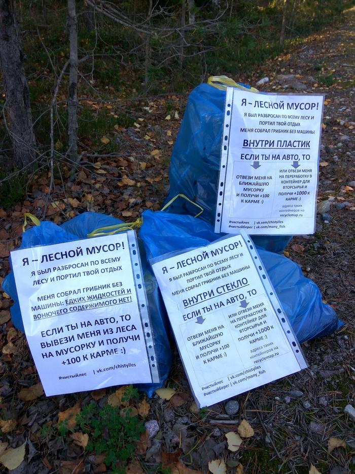 Марафон лесной уборки. Осталось собрать 118 мешков мусора Марафон лесной уборки, Чистый лес, Чистомен, Свалка, Мусор, Уборка, Охрана природы, Длиннопост