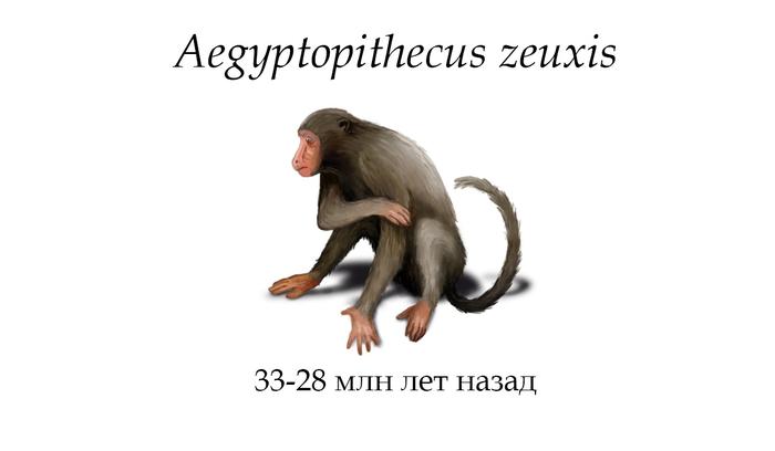 Антропология: Aegyptopithecus zeuxis. Станислав Дробышевский. Станислав Дробышевский, Антропология, Палеонтология, Наука, Noosphere Studio, Aegyptopithecus zeuxis, Видео