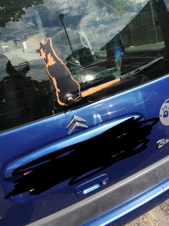 Сюрприз в машине Авто, Сюрприз, Животные, Странности, Длиннопост