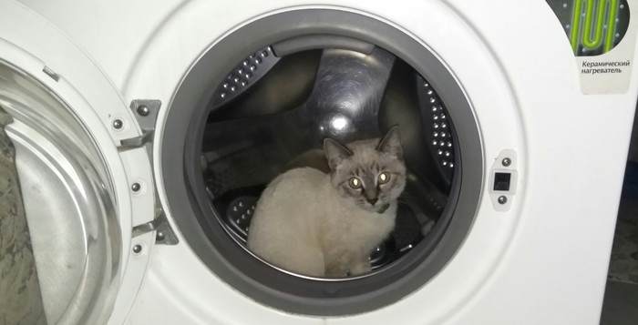 Коты и странности Поехали, Че надо?, Кот
