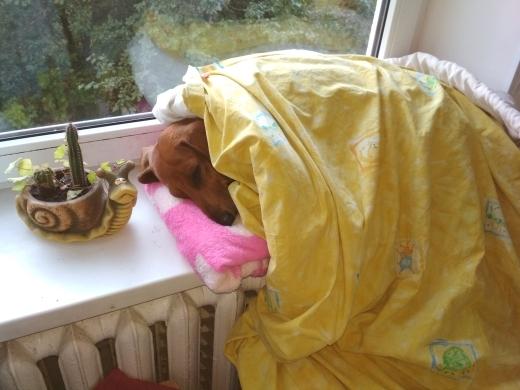 Отпуск с моей врушей Бонечкой Собака, Друг, Друг человека, Боня, Длиннопост