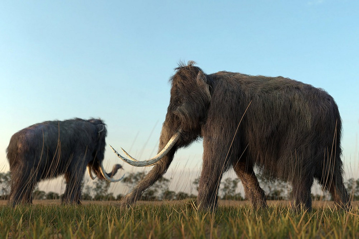 Ученые хотят воссоздать живого мамонта Мамонт, Палеонтология, Генная инженерия, Археология, Клонирование, ДНК, Длиннопост