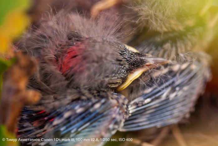 Птички с горшке с геранью Фотография, Макро, Птицы