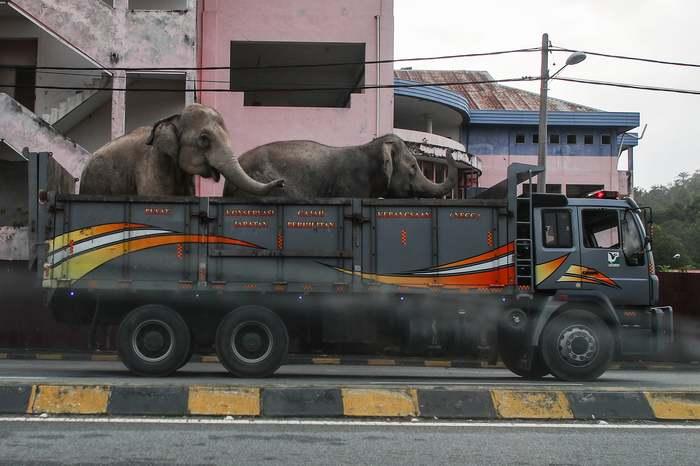 Все говорят: купи слона. А ты взял и купил! Слоны, Авто, Животные, Перевозка, Транспорт