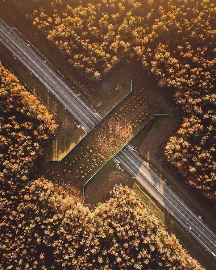 Мост для безопасного перехода диких животных Виадук, Калужская область. Животные, Природа, Интересное, Фотография, Россия, Мост