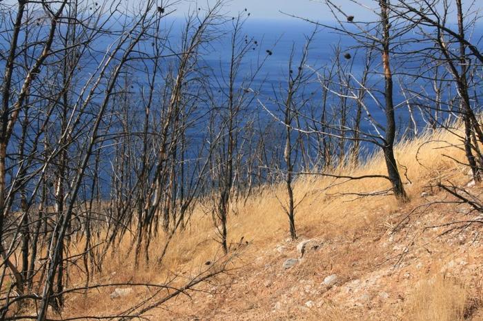 О спиленных деревьях Дерево, Охрана природы, Европа, Ответ на пост, Длиннопост