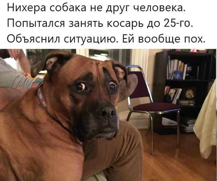 Не хороший мальчик Хороший мальчик, Долг, Из сети, Собака