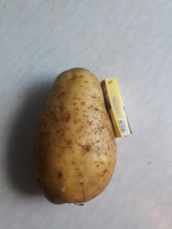 Урожай Урожай, Картофель, Гигант, Здоровая ска, Длиннопост