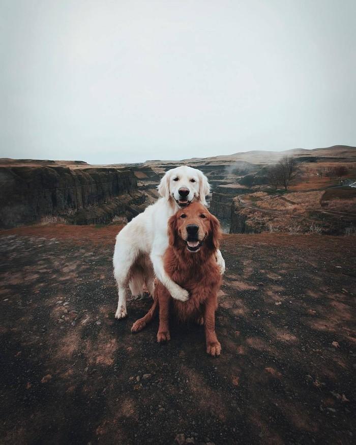 Ох, как же мило и прекрасно Собака, Любовь, Природа, Лес, Животные, Фотография, Пара, Длиннопост