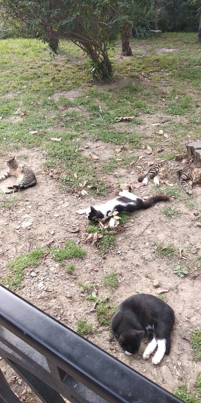 Найди кота Котомафия, Кот, Сочи, Летний театр, Длиннопост