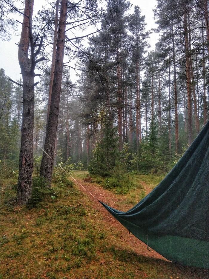 Первые шаги осени Красота природы, Лес, Осень, Природа, Туризм, Поход, Длиннопост