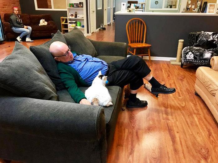Он каждый день ходит в приют для кошек, чтобы покормить их. И поспать с пушистиками под боком США, Пенсионер, Кот, Приют