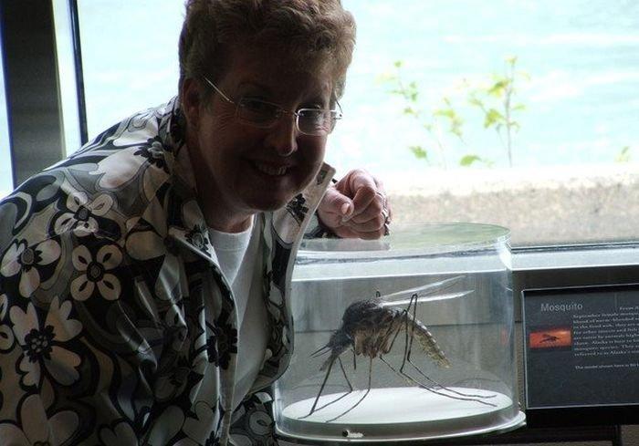 Комары достали? Посмотрите на это чудо.