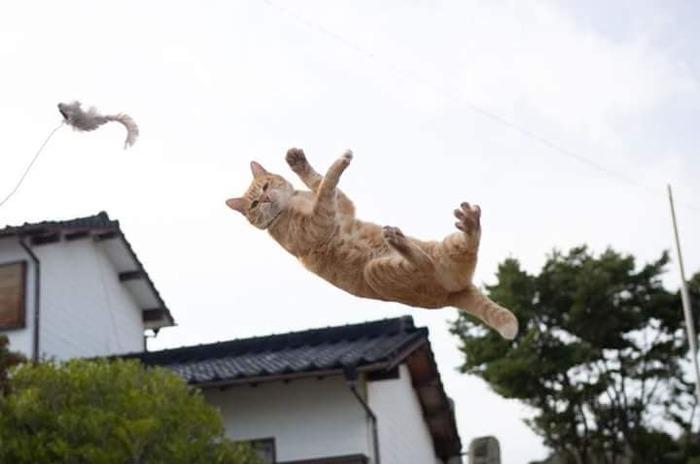 Игра - это серьезно Кот, Прыжок, Длиннопост, Серьезность, Выражение морды
