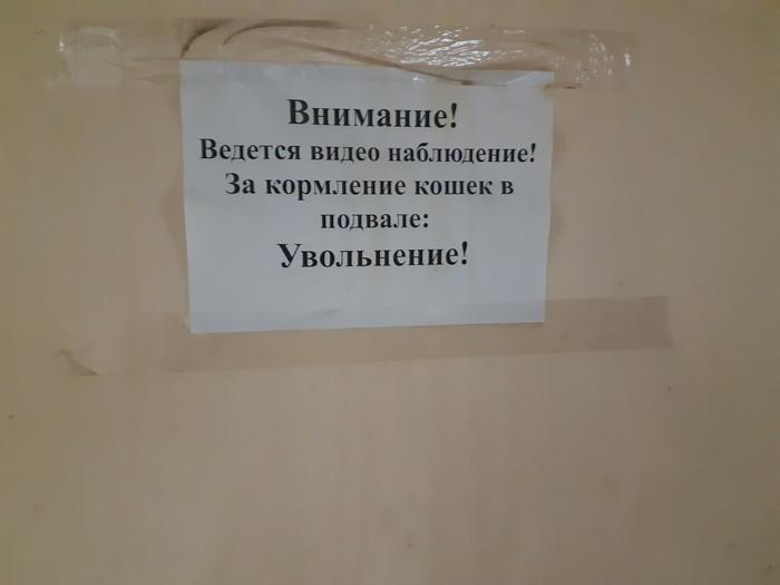 Ивановская Областная больница Больница, Кот, Объявление, Лягушки