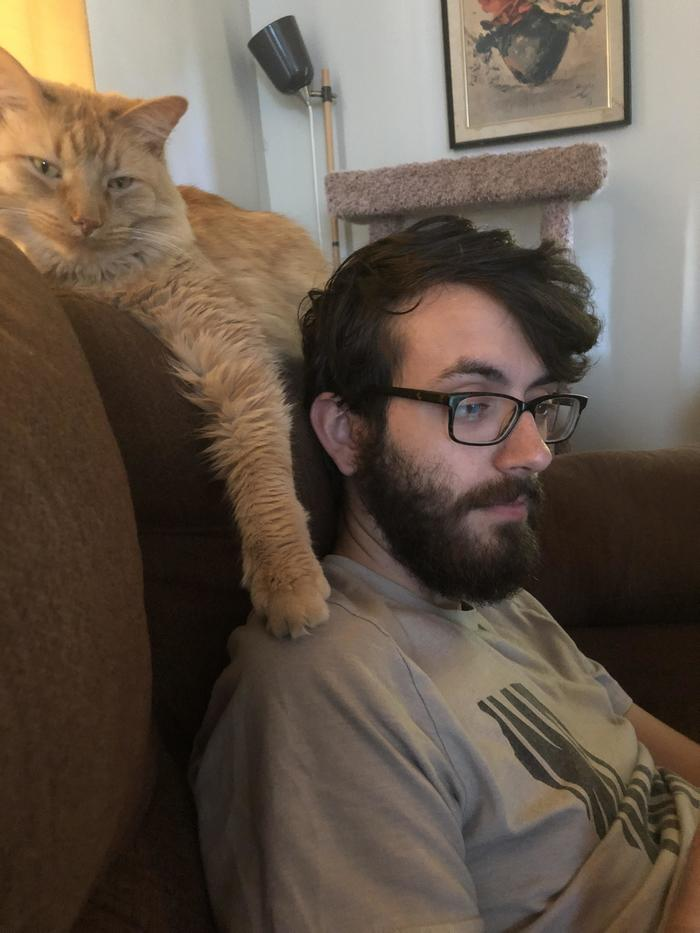 Мой муж не любит кошек, поэтому, естественно, моя кошка делает все возможное, чтобы тонко раздражать его Кот, Диван, Троллинг