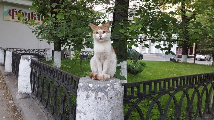 Просто кот Кот, Улица, Памятник