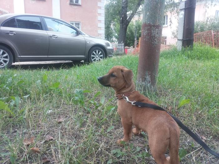 Шарлотта Животные, Собака, Метис, Фотография, Длиннопост