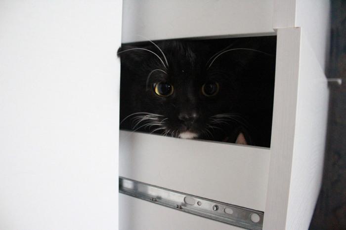 Мой вечно любопытный кот:) Кот, Животные, Длиннопост