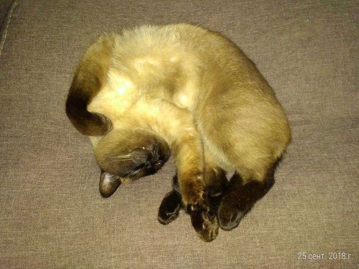 Спящий кот Кот, Сон