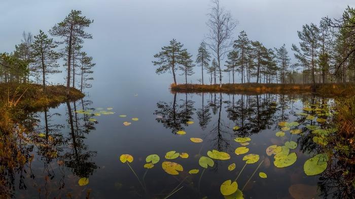 Осеннее утро. Фотография, Пейзаж, Осень, Озеро, Кувшинка, Ленинградская область