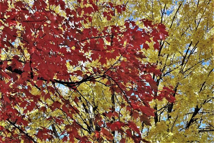 Осень, Канада. Осень, Клен, Канада