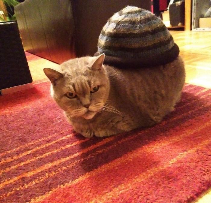 Когда прикупил себе новую шапку к похолоданию, но смахиваешь в ней на пухлую улиточку Кот, Шапка, Из сети, Улитка