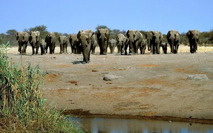 Охота на слонов вне закона? Слоны, Африка, Охота, Зеленые, Green peace, Гринпис, Куда смотрит GreenPeace, Лицемерие