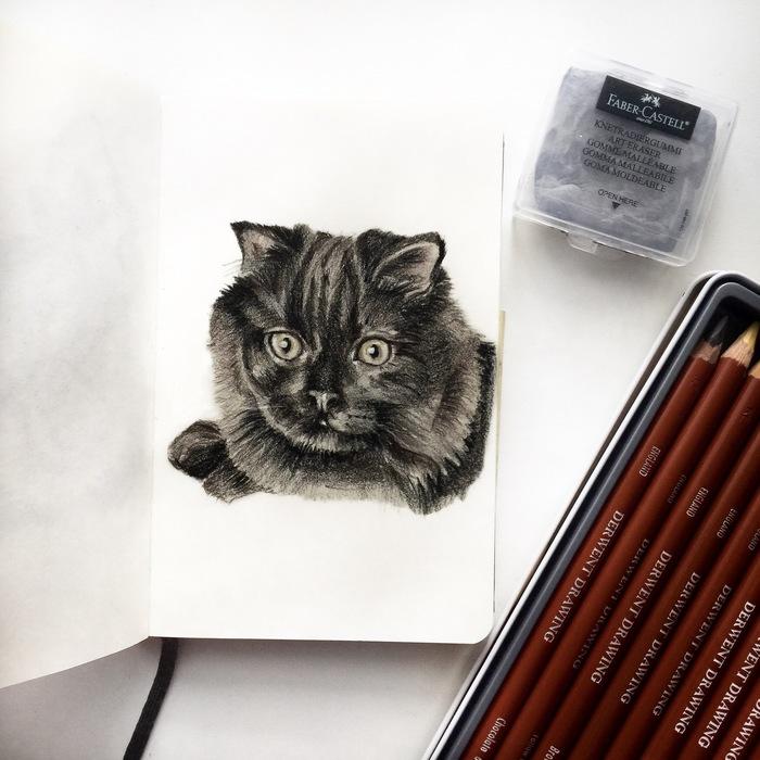 Продолжение кошачьей семейки Кот, Котомафия, Арт, Длиннопост, Рисунок карандашом, Рисунок, Карандаш, Животные, Анималистика