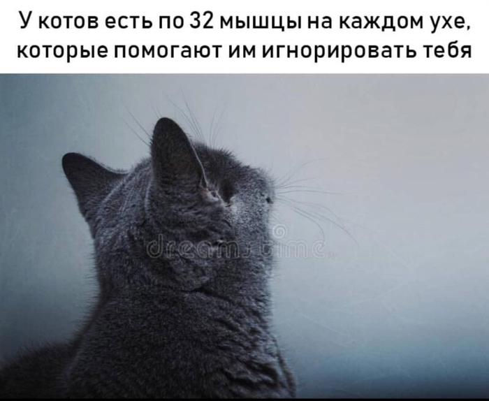 Кто бы сомневался... Кот, Сочи, Игнор