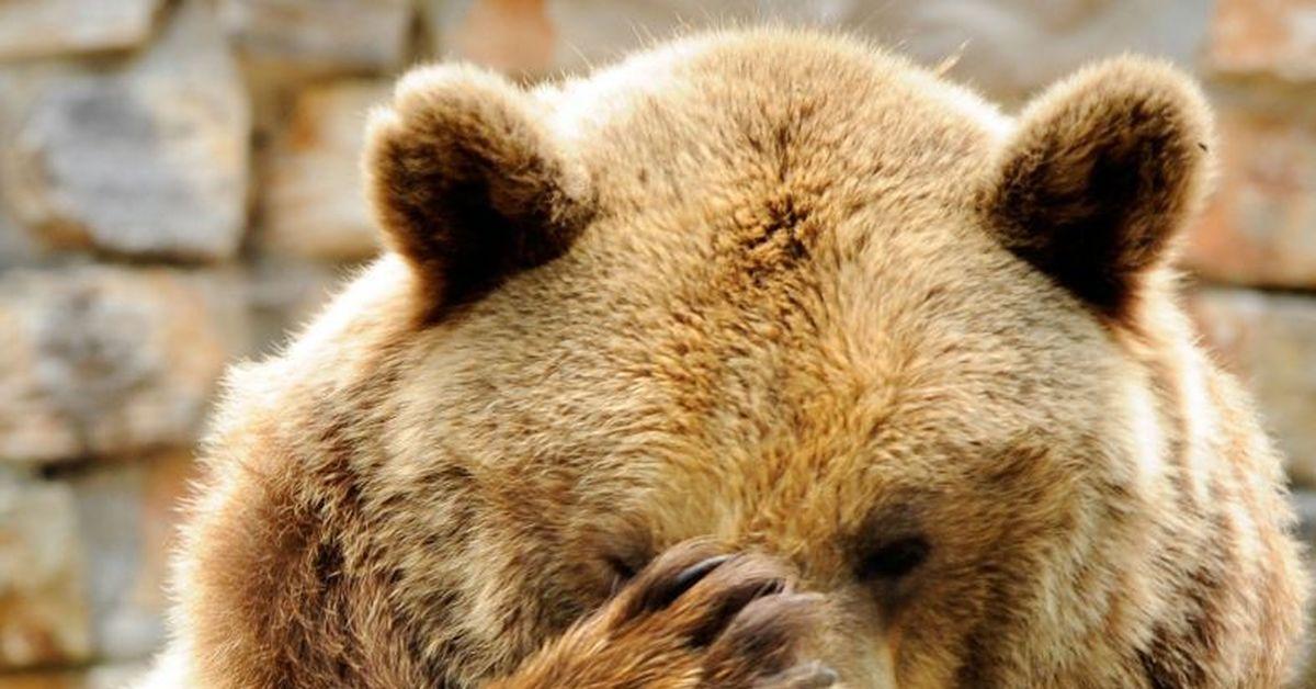 товары картинка медведь подмигивает сравнение