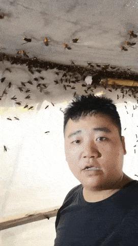 Странные мухи.