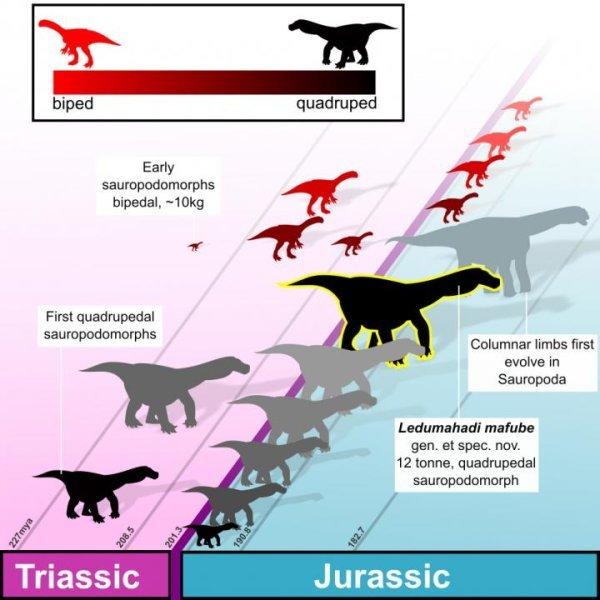 Юрский завроподоморф из Южной Африки поведал ученым, как его сородичи перешли на ходьбу на четырех, а не двух лапах Динозавры, Палеоновости, Палеонтология, Эволюция, Наука, Животные, Биология, Длиннопост