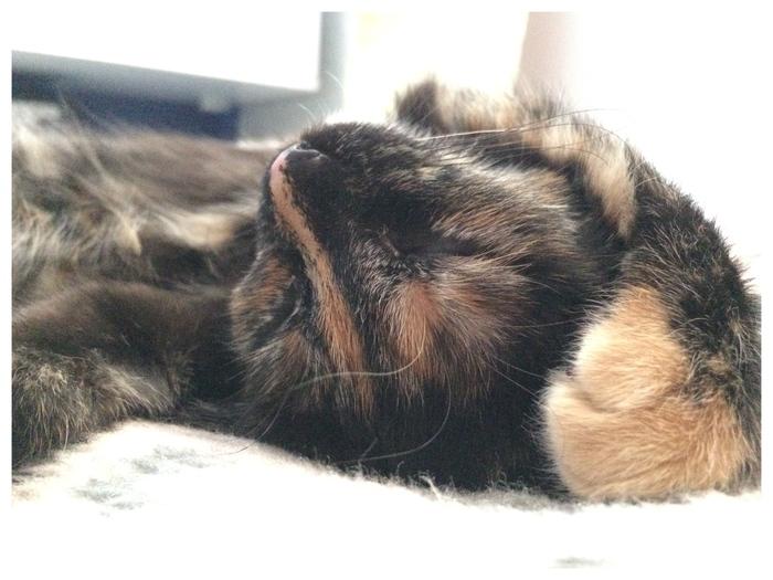 Плюсцы. Плюсы, Фотография, Трехцветная кошка, Взаимопомощь, Книксен