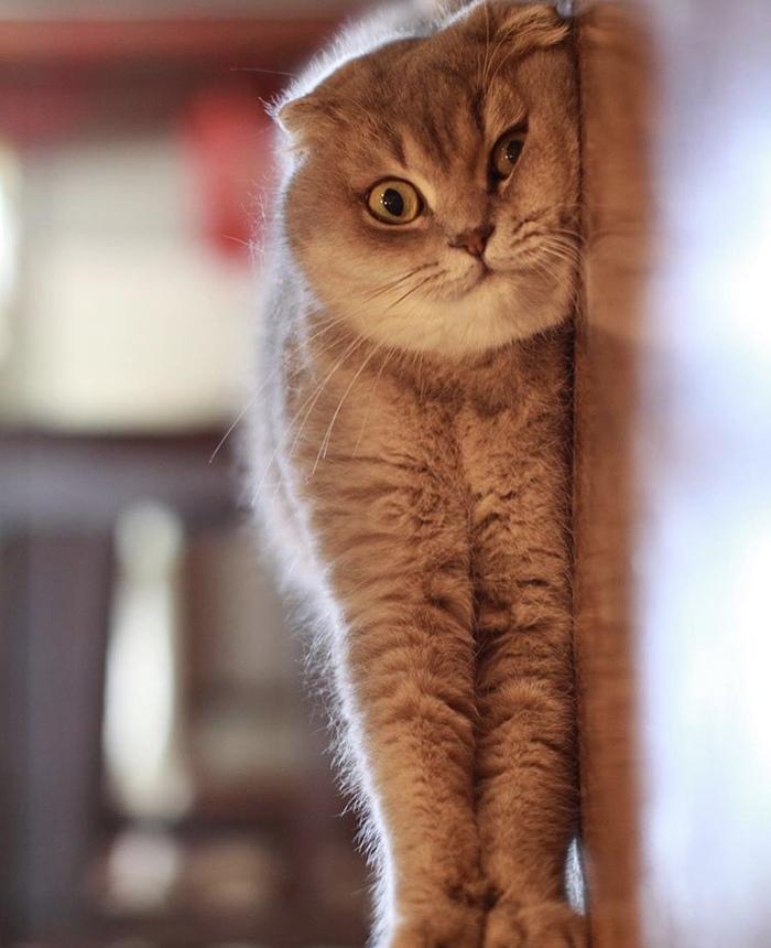 Вертикальный кот