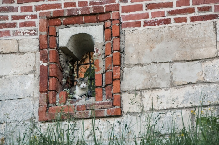 Защитник крепости Моё, Кот, Фотография, Крепостная стена, Смоленск