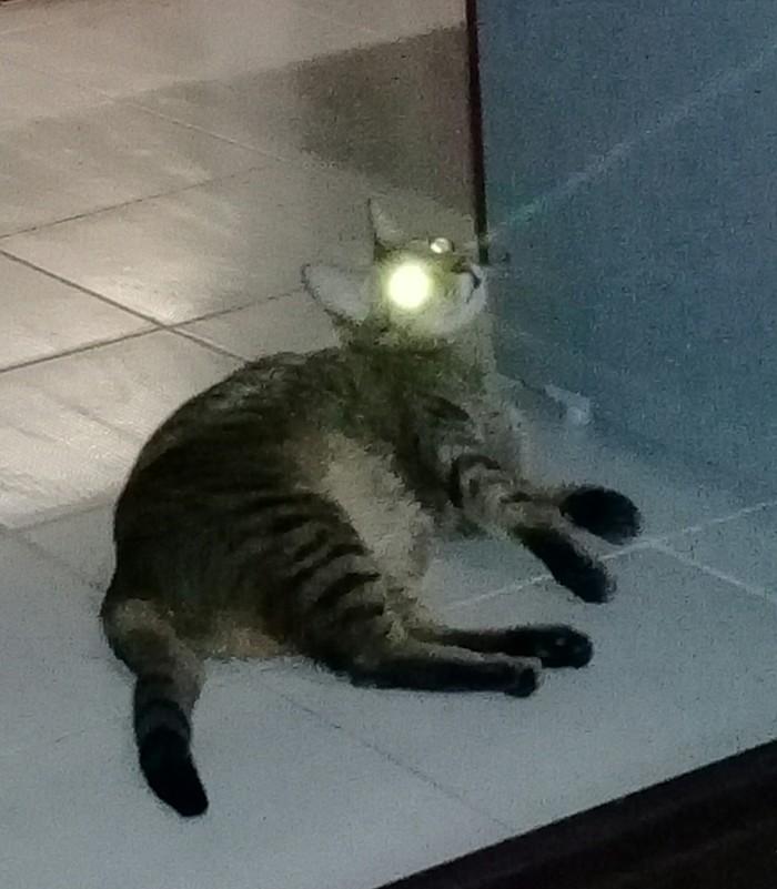 Самонаводящийся прицел. Кот, Лазер, Всем бобра, Длиннопост
