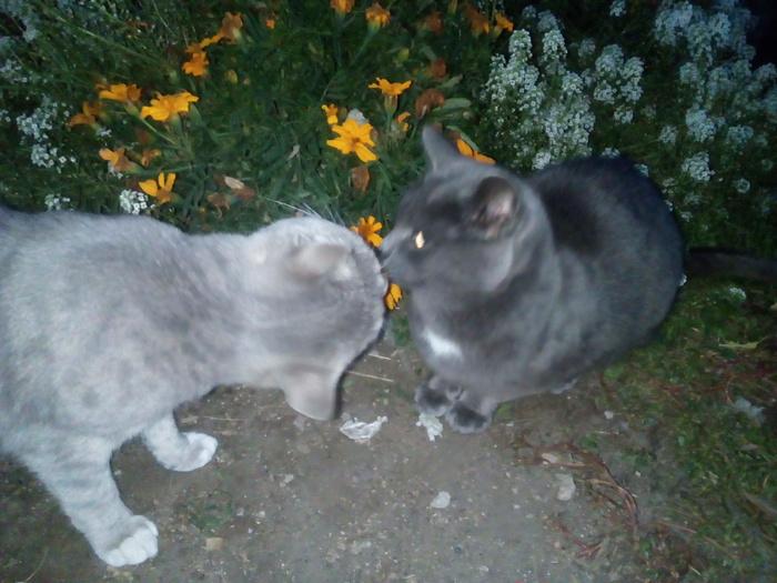 Вечерний пост Моё, Кот, Гусь, Цветы, Неожиданно, Длиннопост