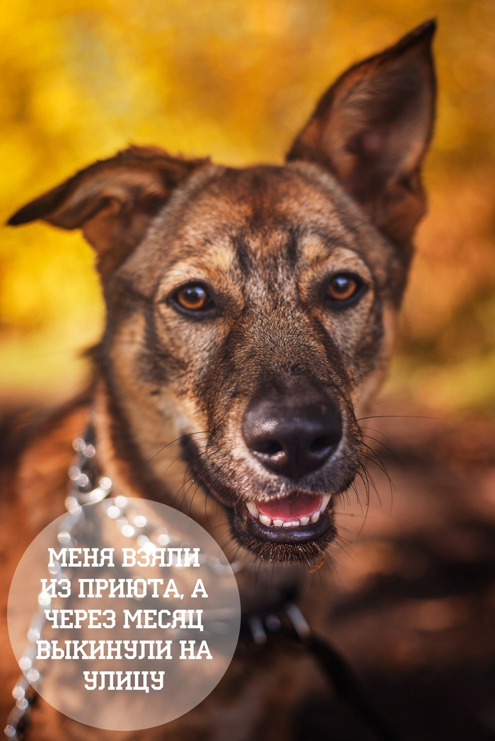 Нижний Новгород! Ищу тёплый дом и маму с папой! Собака, Найдена собака, Дорога домой, Без рейтинга, Длиннопост