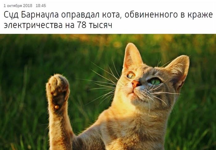 Суд Барнаула оправдал кота Кот, Правосудие, Абсурд, Юмор