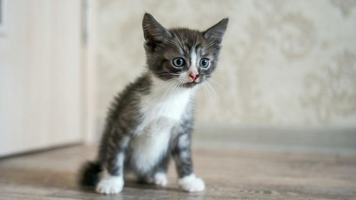Сила Пикабу (пристроить котят) Сила Пикабу, Котята, Рязань, Длиннопост, Без рейтинга, Кот, В добрые руки, Помощь