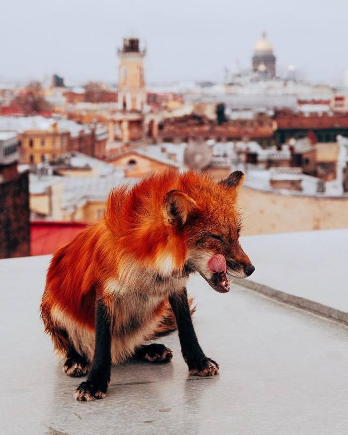Странная кошка завелась на питерской крыше