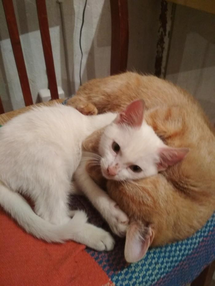 Дачные котики. Рыжие, Длиннопост, Кот, Анапа