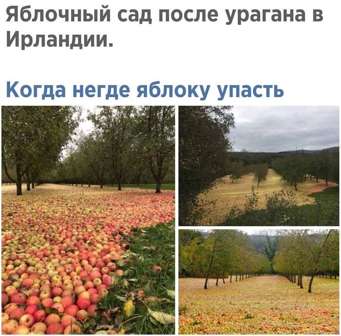 Когда негде яблоку упасть