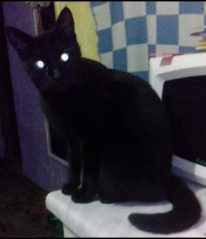 Знакомьтесь, наша котомафия Кот и ребенок, Люди и кошки, Длиннопост, Кот