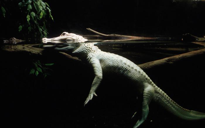 Крокодил на самом деле Крокодил, Новое знание, Животные, Дикая природа