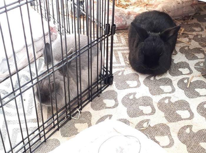 Сиеста Шьямы и Тучки Домашние животные, Кролик, Шьяма и тучка, Не еда