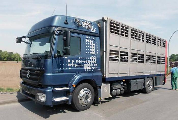 Откорм бычков из Австрии Фермер, Откорм бычков, Розовая телятина, Говядина, Семейная ферма, Бизнес в деревне, Видео
