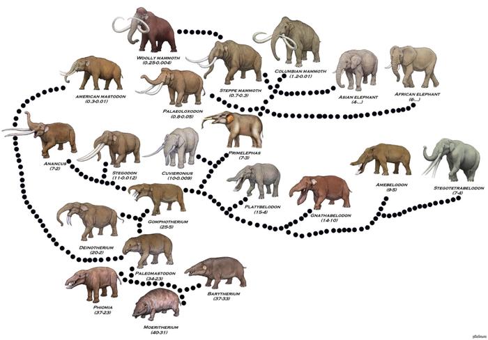 Мамонт ожил? (На самом деле нет) Мамонт, Слоны, Наука, Палеонтология, Плейстоцен, Эволюция, Животные, Видео, Длиннопост
